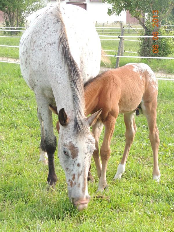 Mes chevaux, un mélange d'un peu tout le monde! - Page 6 Quarin51