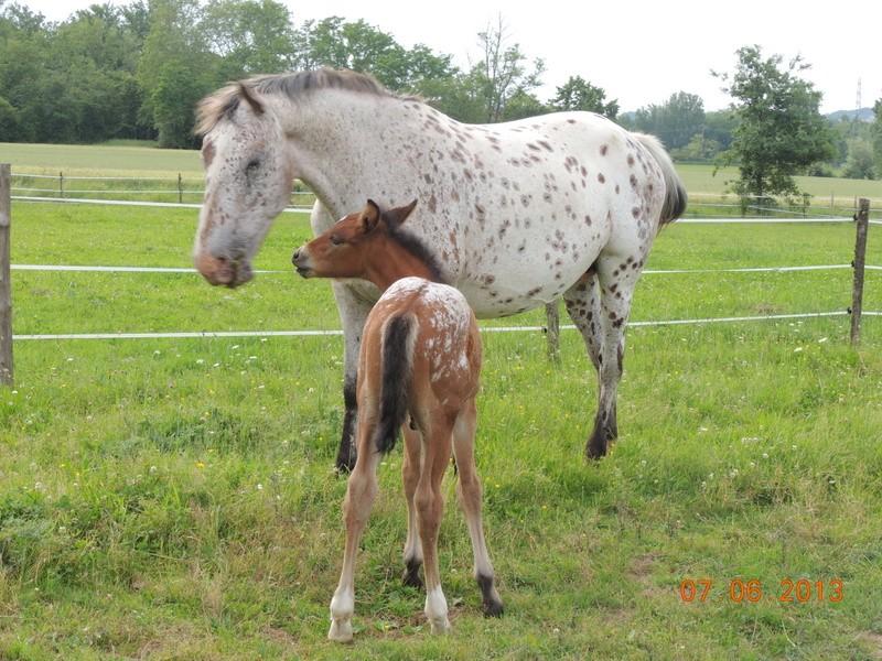 Mes chevaux, un mélange d'un peu tout le monde! - Page 6 Quarin52