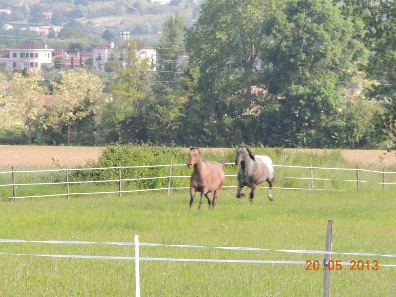 Mes chevaux, un mélange d'un peu tout le monde! - Page 5 Uppy_e10