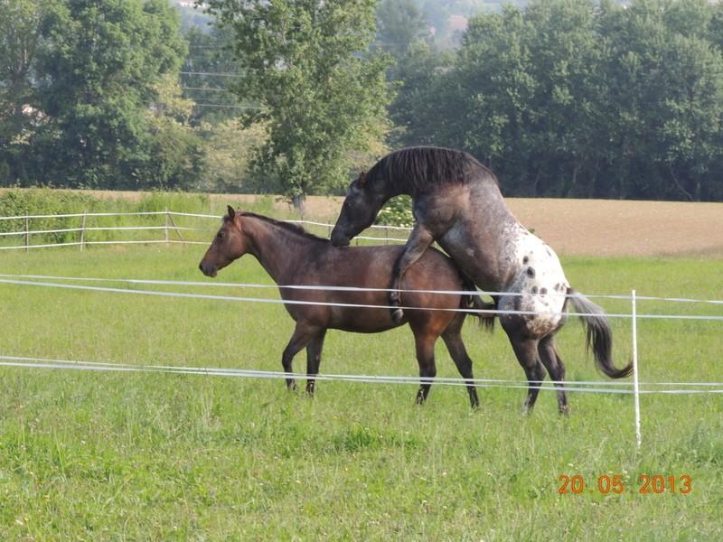 Mes chevaux, un mélange d'un peu tout le monde! - Page 5 Uppy_e11