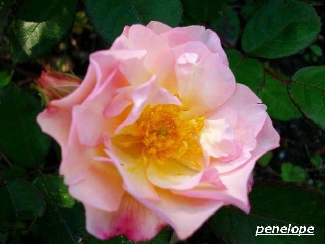 PENELOPE Juin_065