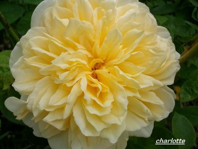 charlotte  Juin_093