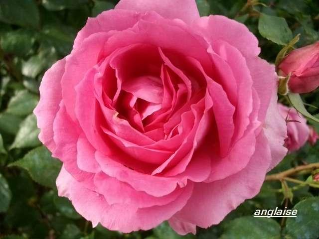 32 - La couleur rose !!! - Page 6 Juin_219