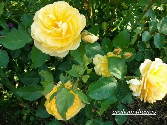 33 - Un nouveau thème.........alors jaune !!! - Page 2 Juin_267