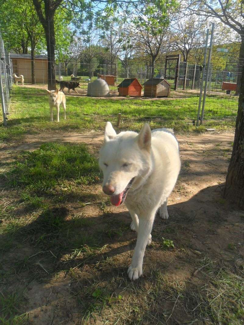 Orca, Husky, âgée de 14 ans née 20 Décembre 2000,  Eden Valley  ASSO39 - Page 3 La_bel10