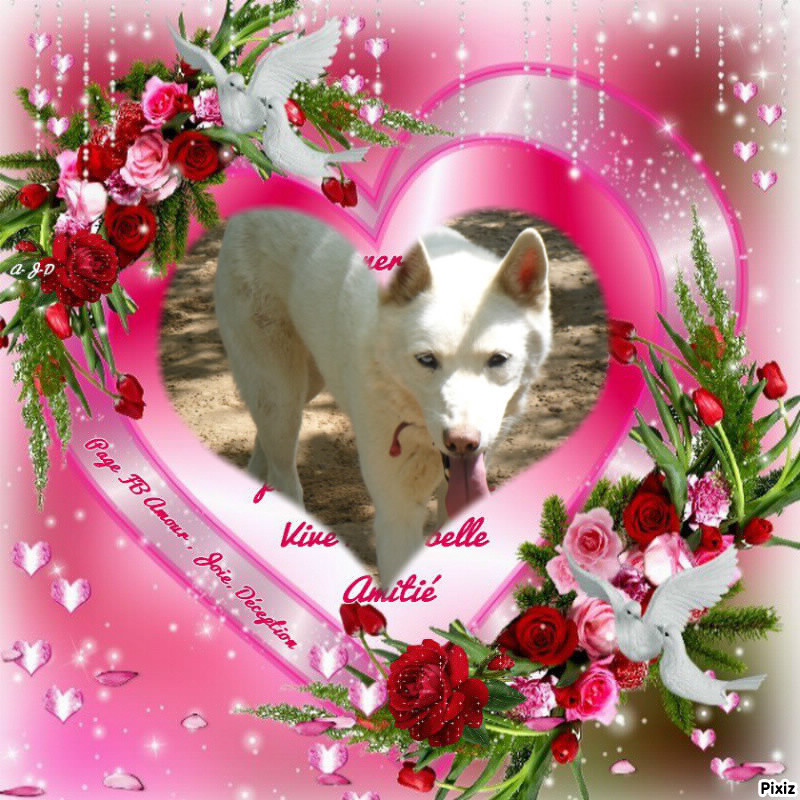 Orca, Husky, âgée de 14 ans née 20 Décembre 2000,  Eden Valley  ASSO39 - Page 3 Orca_110