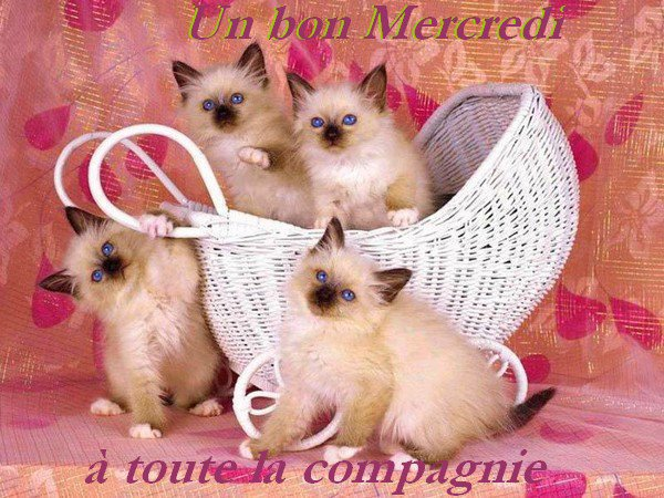 Bon Mercredi Bon_me10