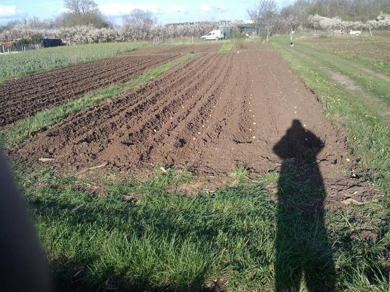 les pommes de terre Img_2011