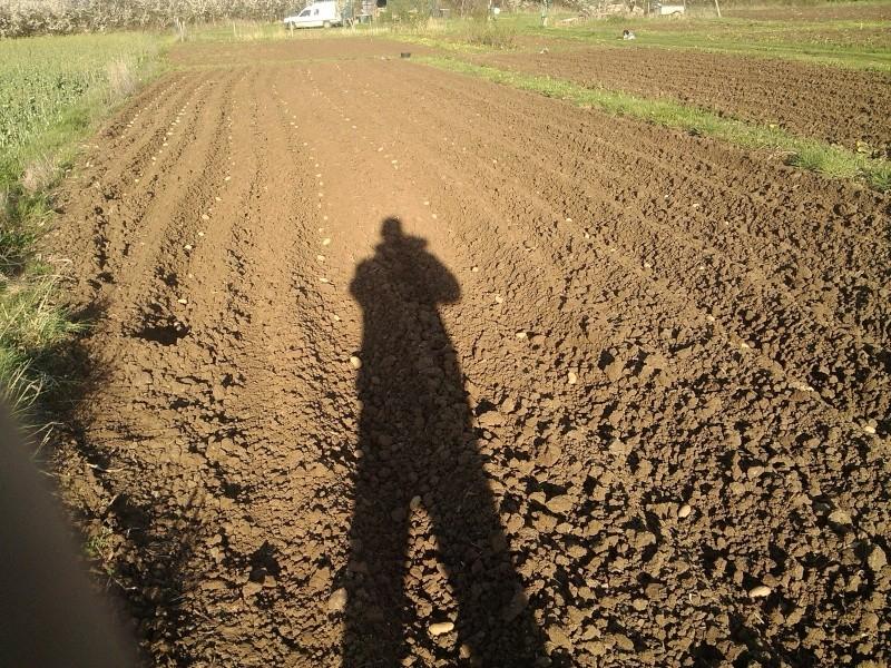 les pommes de terre Img_2012