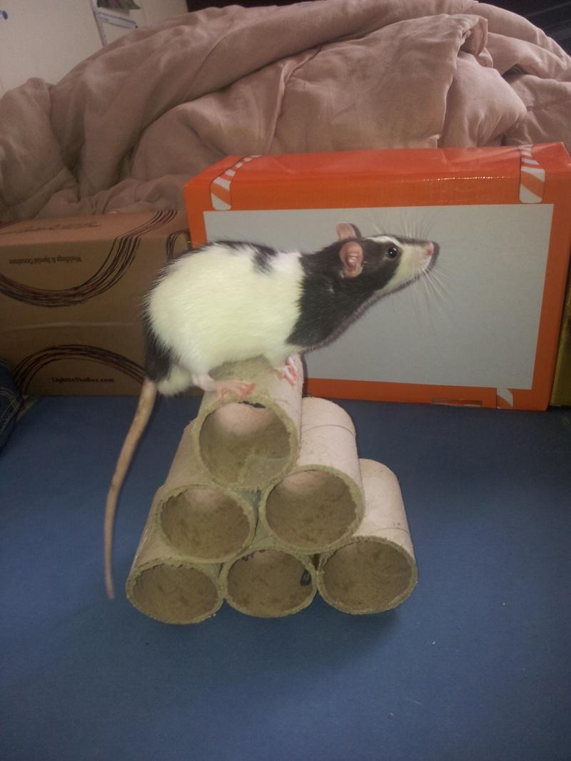 Mes rats d'amour 20130612