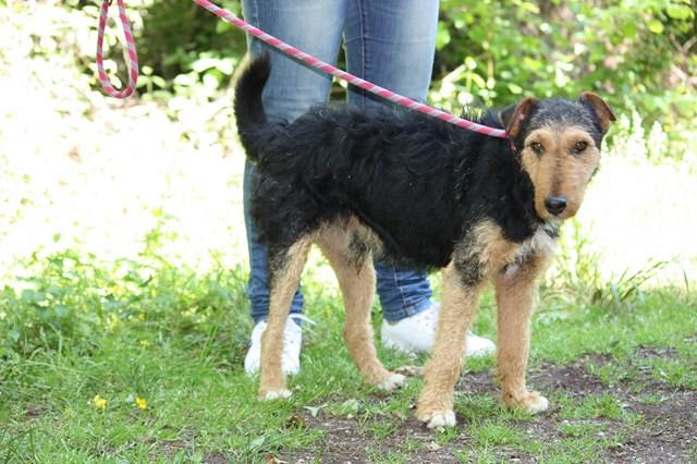 FOXY xJagd Terrier 250269802121955 Img_3314