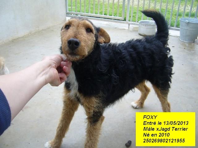 FOXY xJagd Terrier 250269802121955 P1160025