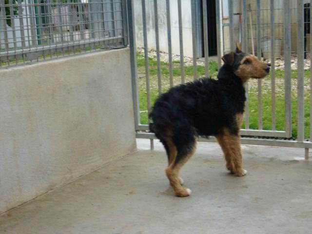 FOXY xJagd Terrier 250269802121955 P1160026