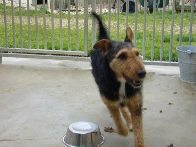FOXY xJagd Terrier 250269802121955 P1160027