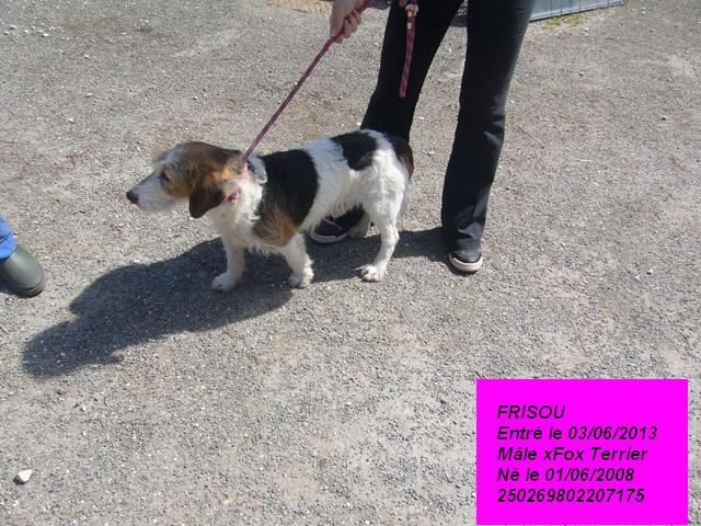 FRISOU xFox Terrier 250269802207175 P1160631
