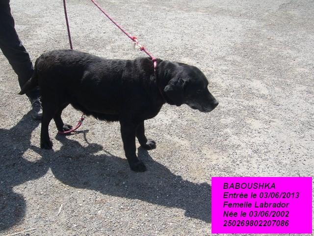 BABOUSHKA Labrador noire 250269802207086 P1160637