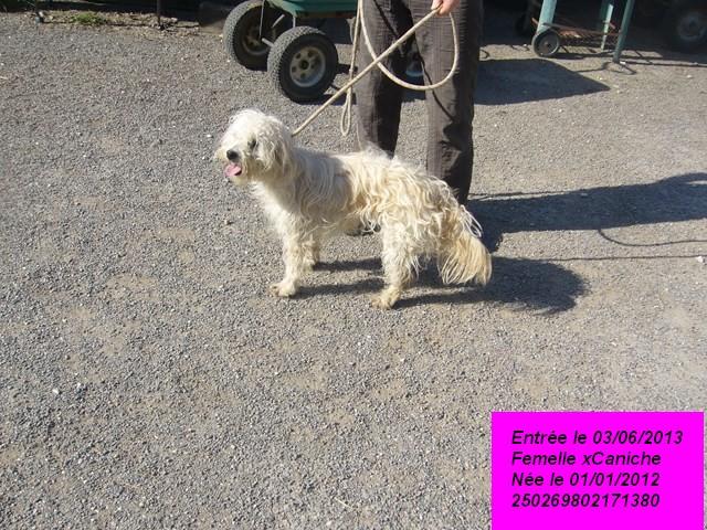 GULLIA xCaniche blanche 250269802171380 P1160714
