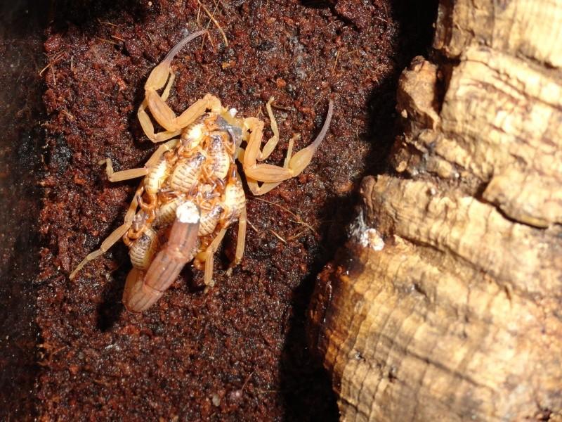 Envyizm's scorpion pictures - Page 6 Dsc00611