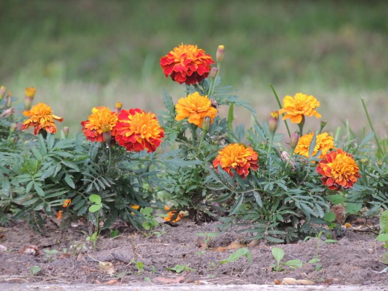Фотографии цветов и деревьев - Страница 17 Dscn7517
