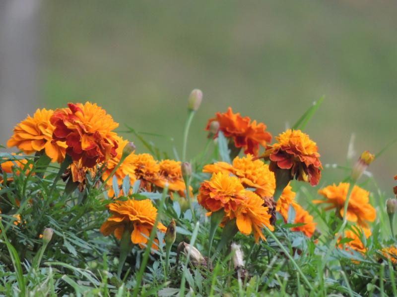 Фотографии цветов и деревьев - Страница 17 Dscn7518