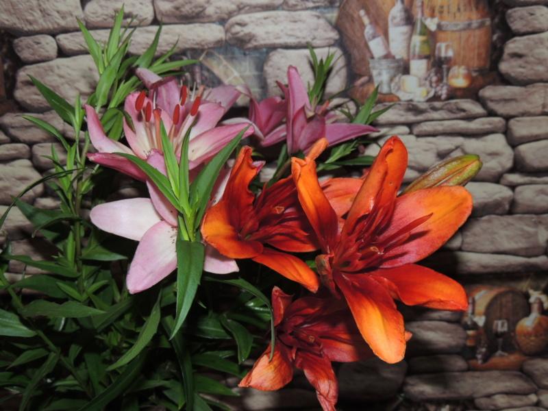 Фотографии цветов и деревьев - Страница 17 Dscn7519