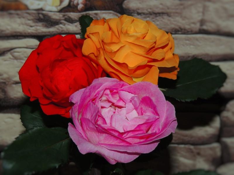 Фотографии цветов и деревьев - Страница 17 Dscn8010
