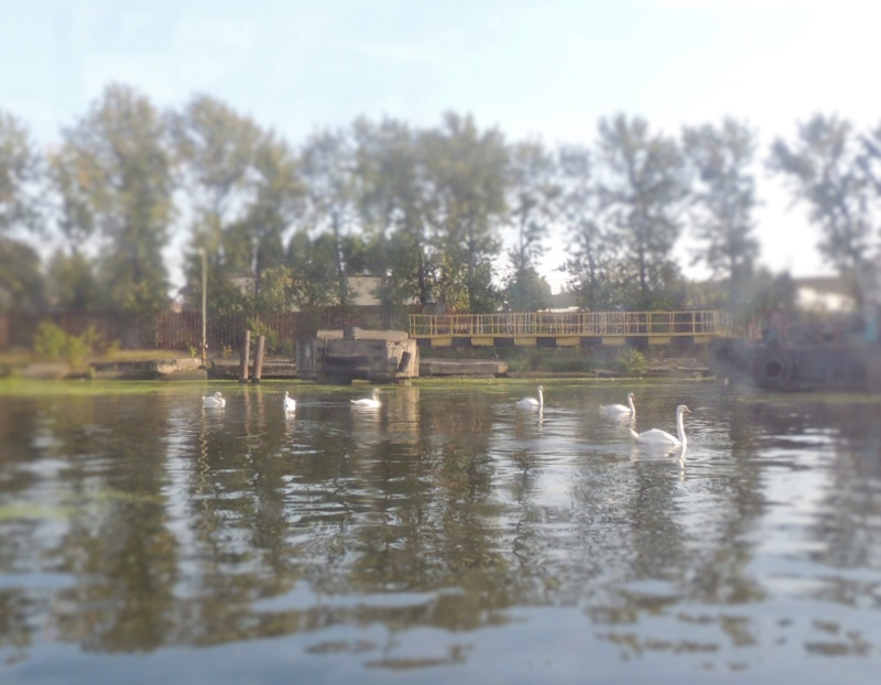 Калининград, Калининградская область Dscn9716