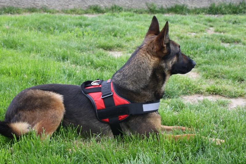 Vos chiens et leurs harnais! Photo  - Page 2 00310