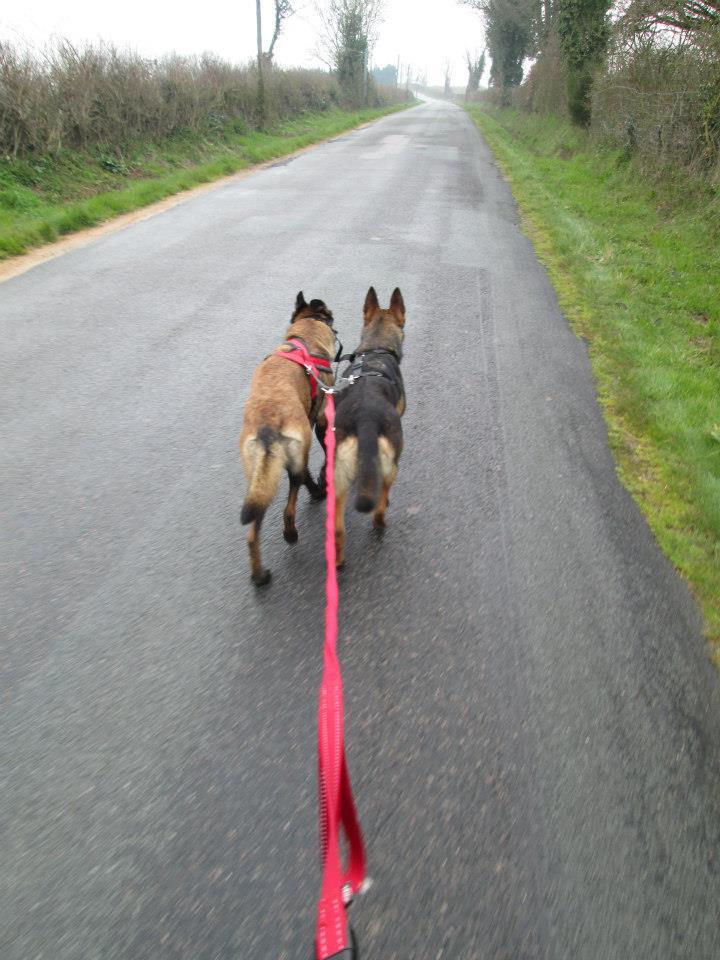 Vos chiens et leurs harnais! Photo  - Page 2 12492_11