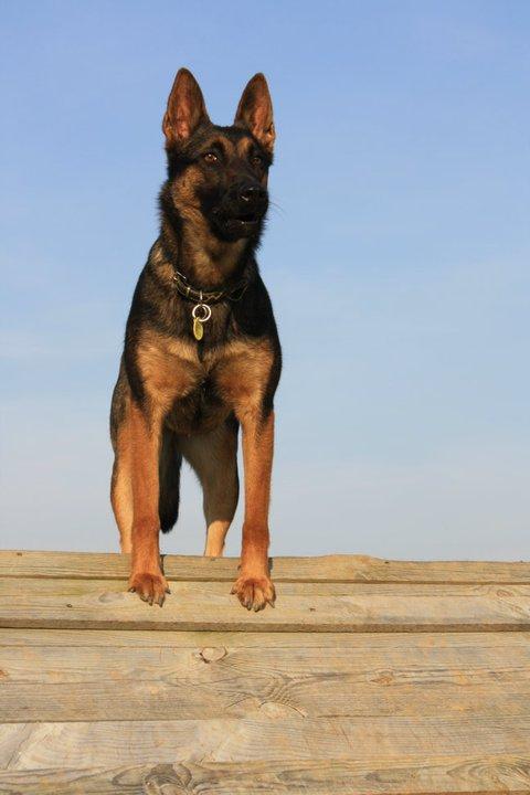 Photo de vos chien noir et beige! - Page 2 18193410