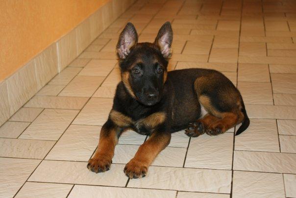 Photo de vos chien noir et beige! - Page 2 20943_10
