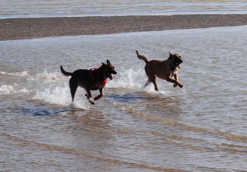 Photo de vos chiens à la plage! Dsc_0020