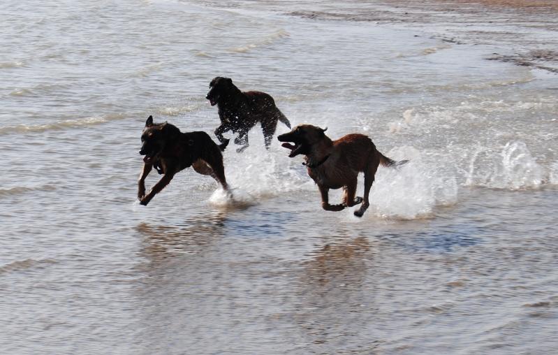 Photo de vos chiens à la plage! Dsc_0110
