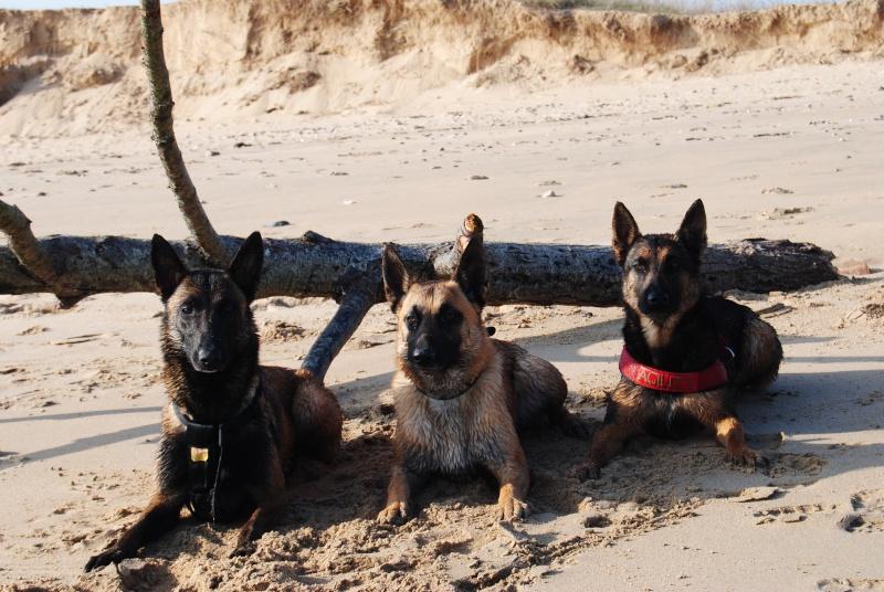 Photo de vos chiens à la plage! Dsc_0111