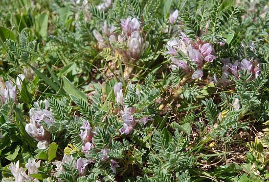 12 herbes médicinales à connaître absolument Herbes10
