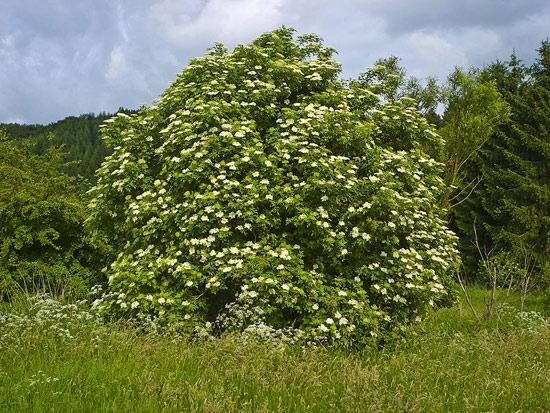 12 herbes médicinales à connaître absolument Herbes13