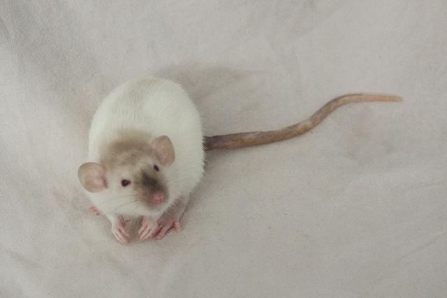 Lisa et ses 7 ratons Melwen12