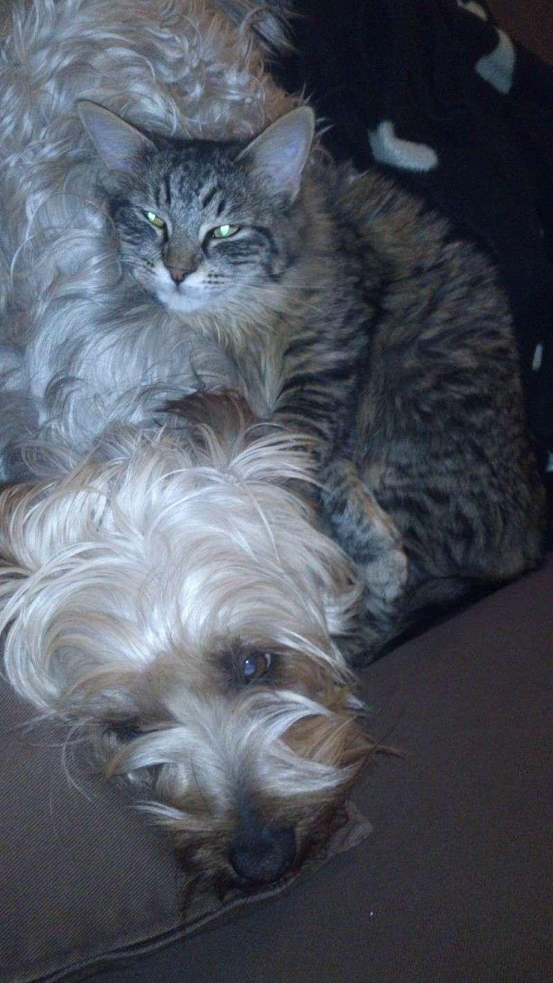 Aidez-moi s'il vous plait...Mon chat a disparu Patcha11