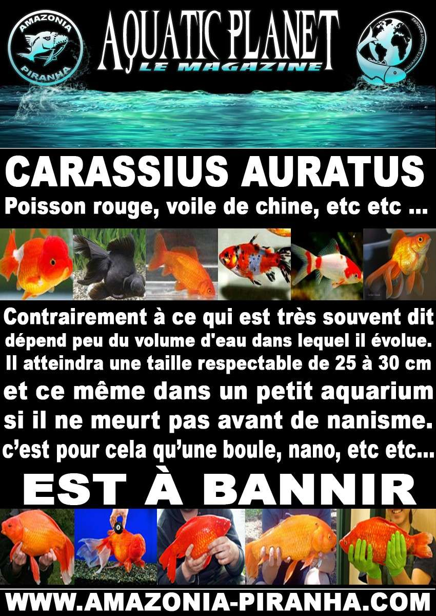 tyrano34 - Mes Objectifs d'aquariophile responsable - Page 2 Praven10