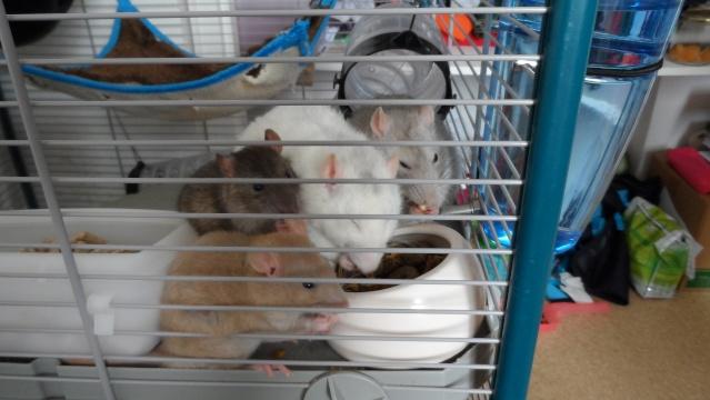 Mon quatuor infernal ! ♥ Sam_3510