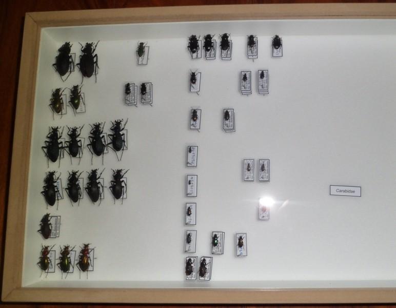 Présentation des collections Entomologiques - Page 6 Sam_4914