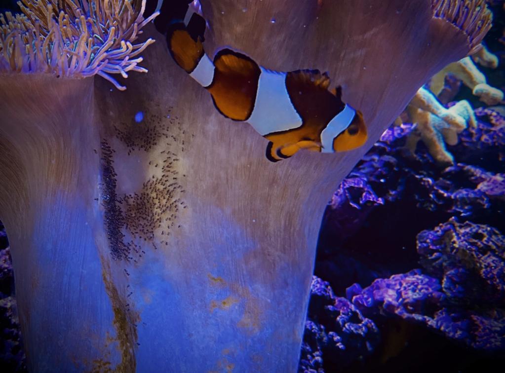 [PHOTO] Aquarium Récifale  Img_2610