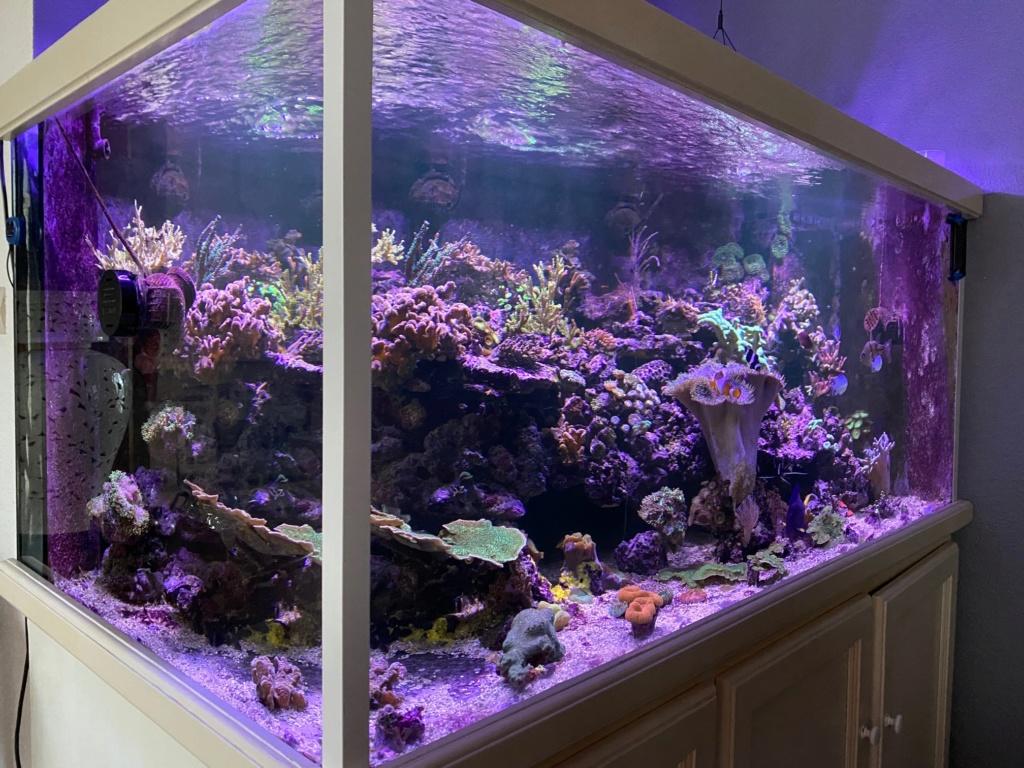 [PHOTO] Aquarium Récifale  Img_2611
