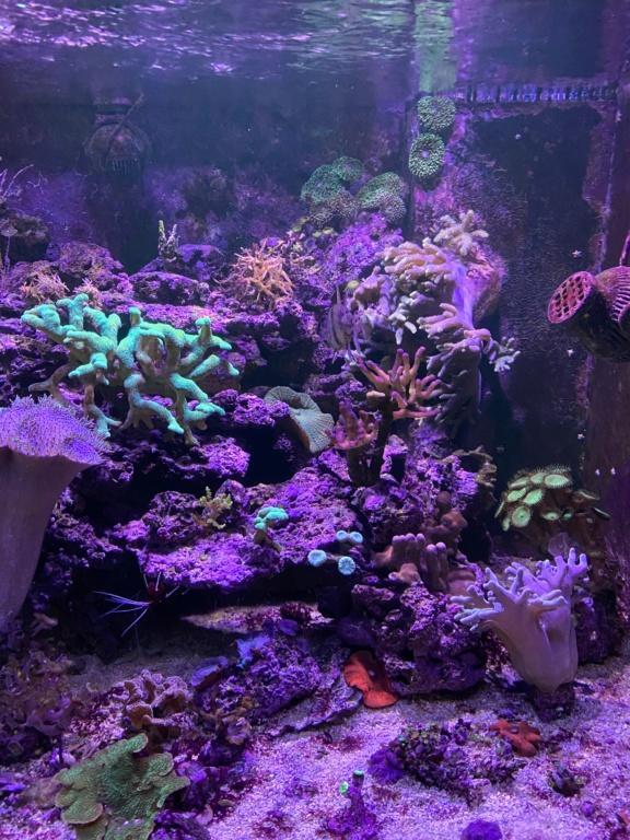 [PHOTO] Aquarium Récifale  Img_2612