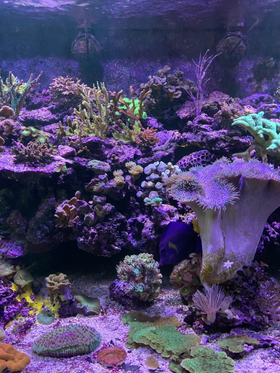 [PHOTO] Aquarium Récifale  Img_2613