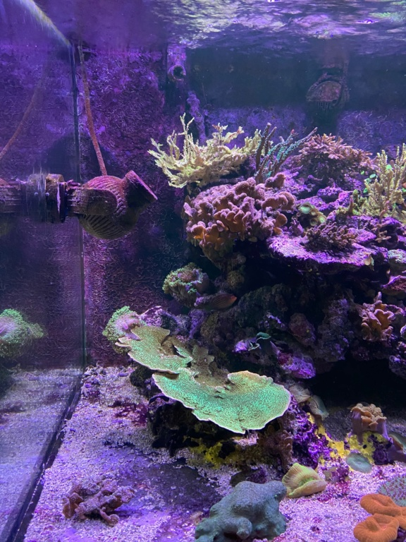 [PHOTO] Aquarium Récifale  Img_2614