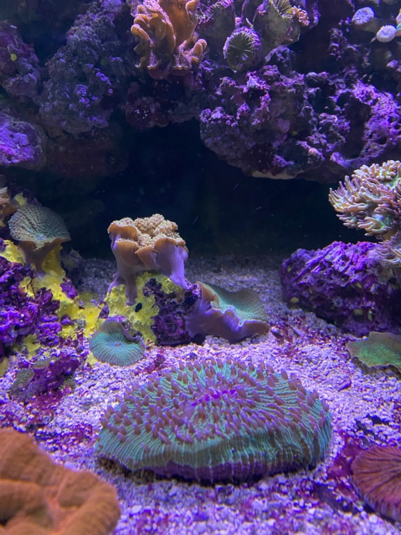 [PHOTO] Aquarium Récifale  Img_2616