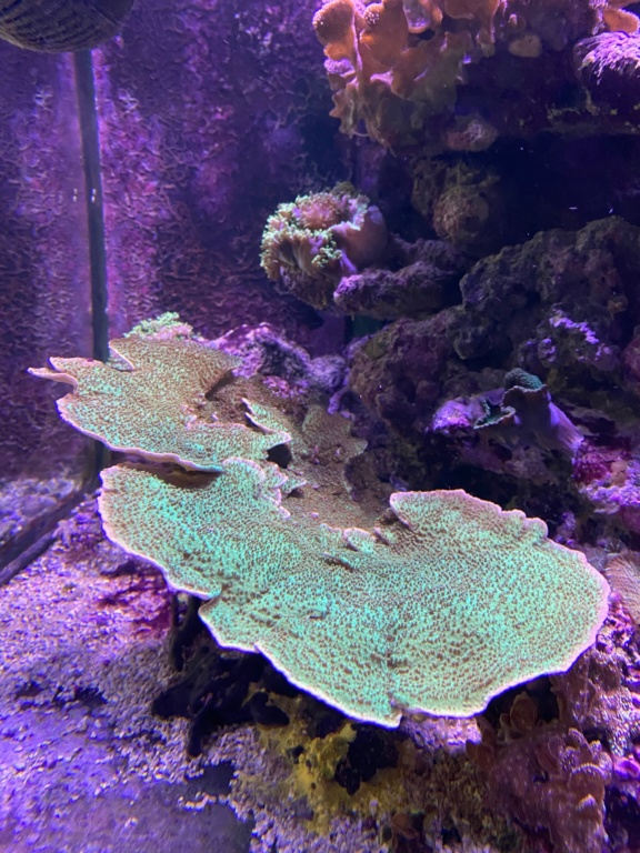 [PHOTO] Aquarium Récifale  Img_2617