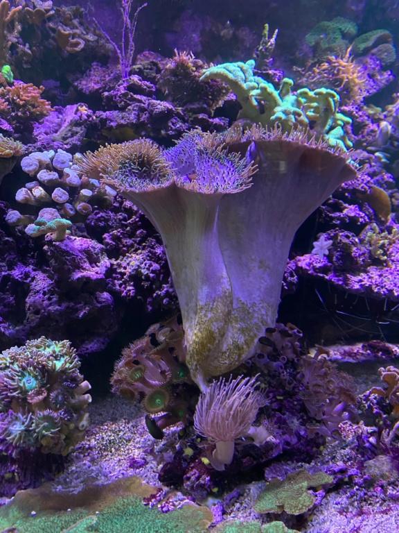 [PHOTO] Aquarium Récifale  Img_2619