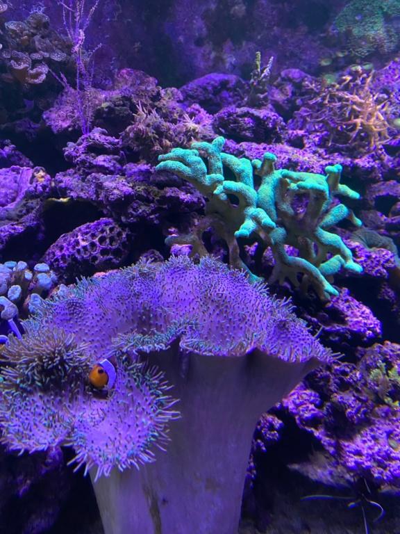 [PHOTO] Aquarium Récifale  Img_2620